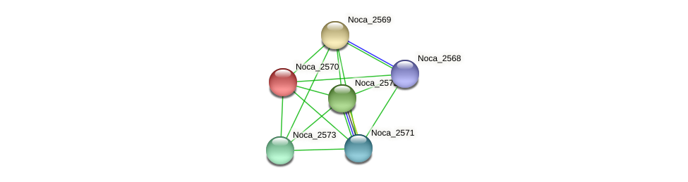 Noca_2570 protein (Nocardioides sp. JS614) - STRING interaction network