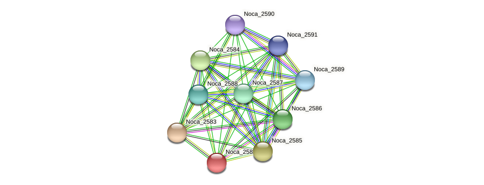 Noca_2582 protein (Nocardioides sp. JS614) - STRING interaction network