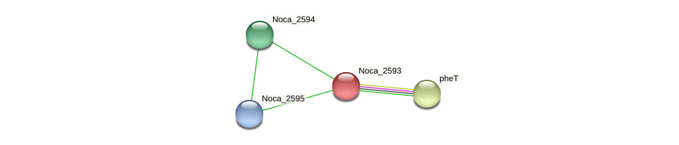 Noca_2593 protein (Nocardioides sp. JS614) - STRING interaction network