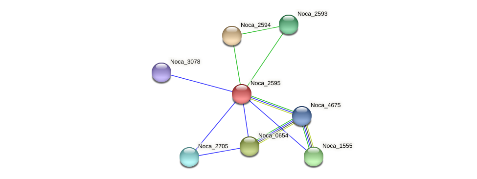 Noca_2595 protein (Nocardioides sp. JS614) - STRING interaction network