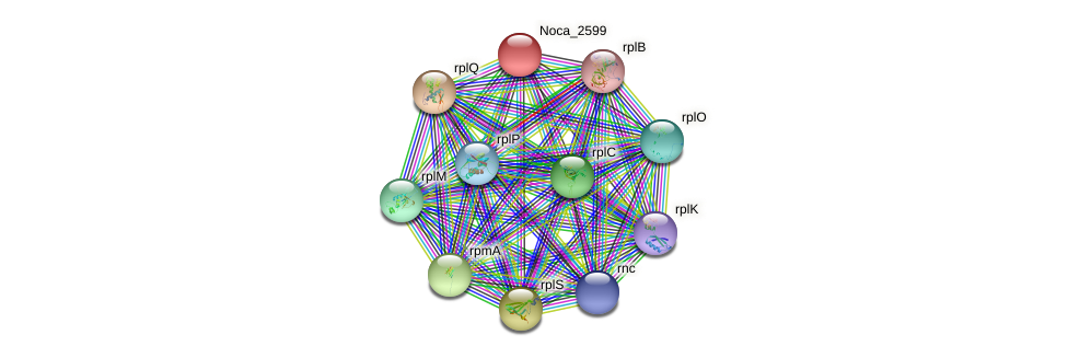 Noca_2599 protein (Nocardioides sp. JS614) - STRING interaction network