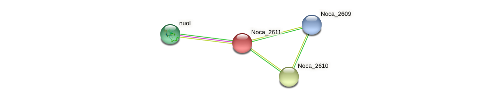 Noca_2611 protein (Nocardioides sp. JS614) - STRING interaction network