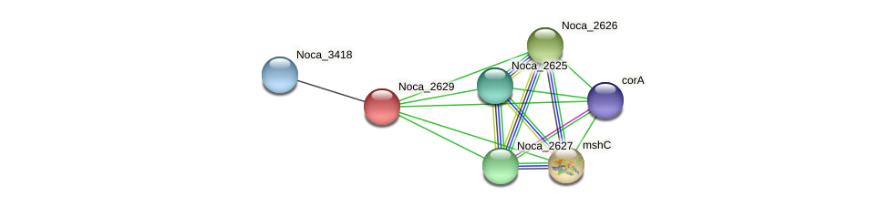 Noca_2629 protein (Nocardioides sp. JS614) - STRING interaction network