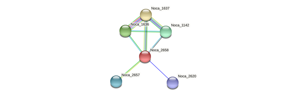 Noca_2658 protein (Nocardioides sp. JS614) - STRING interaction network