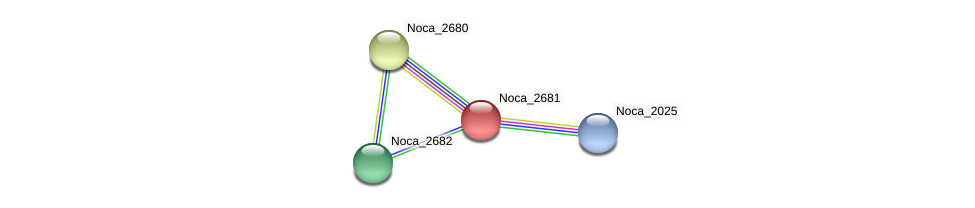Noca_2681 protein (Nocardioides sp. JS614) - STRING interaction network