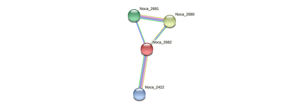 Noca_2682 protein (Nocardioides sp. JS614) - STRING interaction network