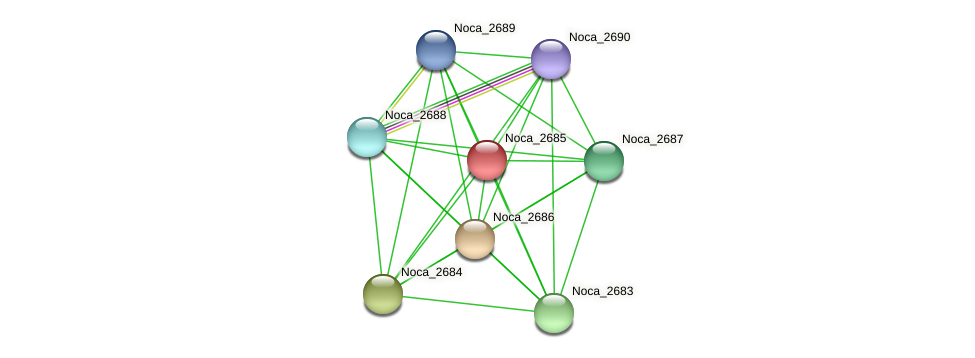Noca_2685 protein (Nocardioides sp. JS614) - STRING interaction network