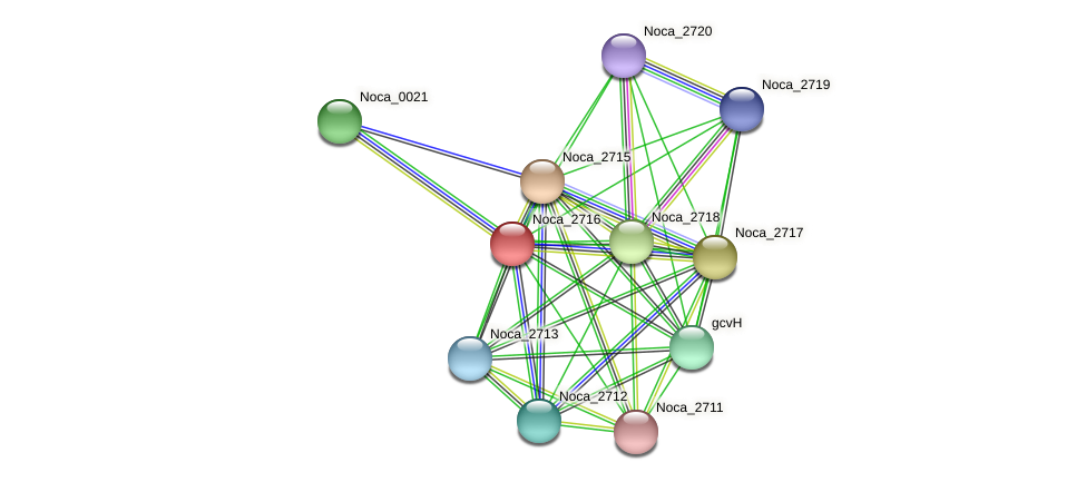Noca_2716 protein (Nocardioides sp. JS614) - STRING interaction network