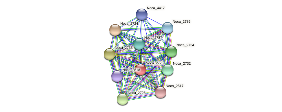 Noca_2725 protein (Nocardioides sp. JS614) - STRING interaction network