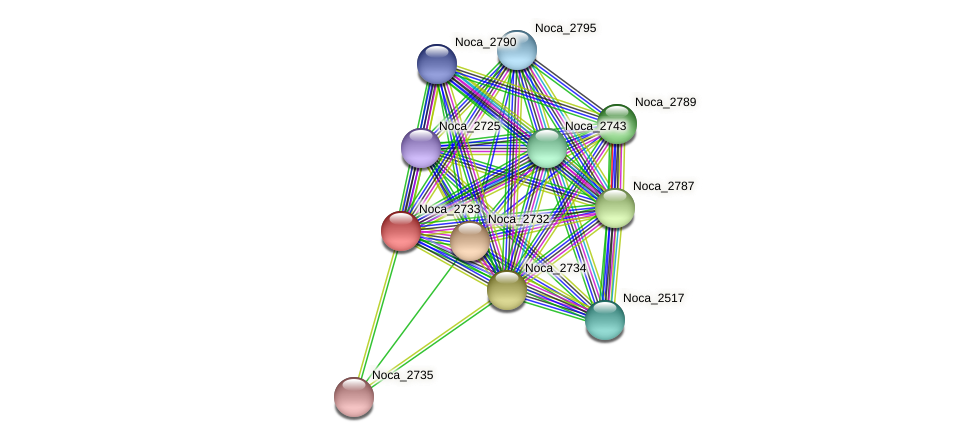 Noca_2733 protein (Nocardioides sp. JS614) - STRING interaction network