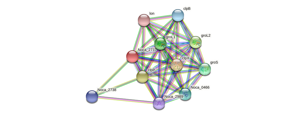 Noca_2737 protein (Nocardioides sp. JS614) - STRING interaction network
