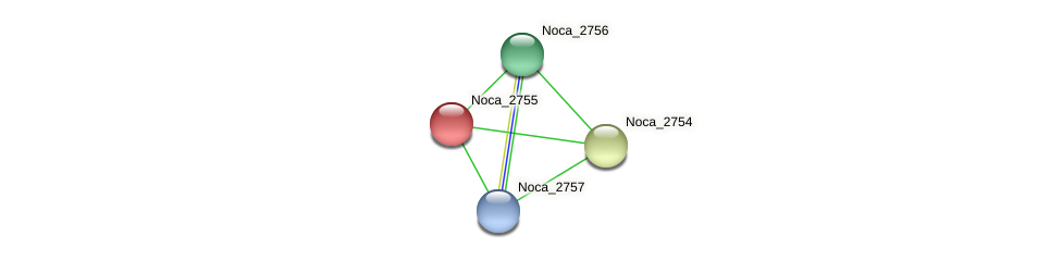 Noca_2755 protein (Nocardioides sp. JS614) - STRING interaction network