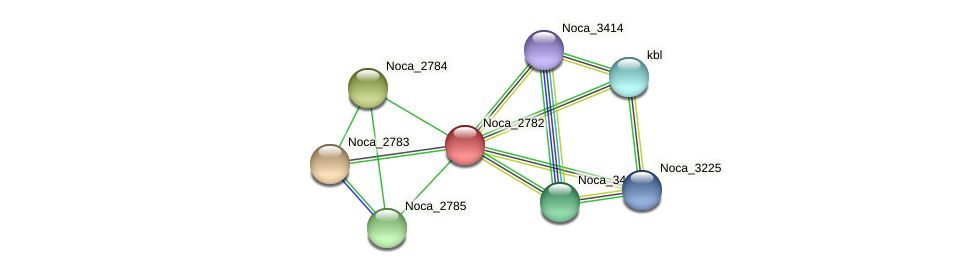 Noca_2782 protein (Nocardioides sp. JS614) - STRING interaction network