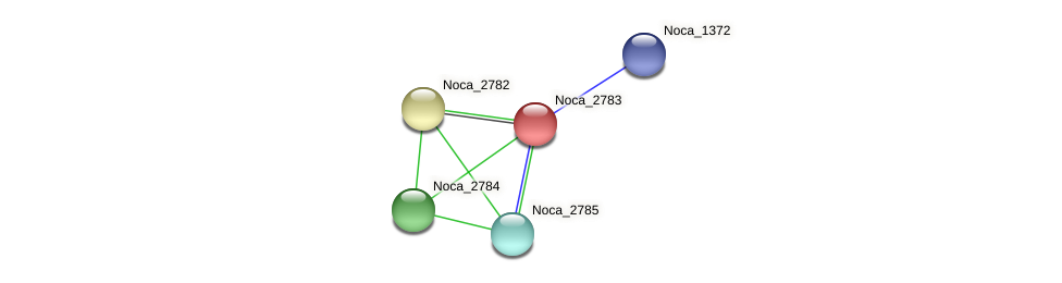 Noca_2783 protein (Nocardioides sp. JS614) - STRING interaction network