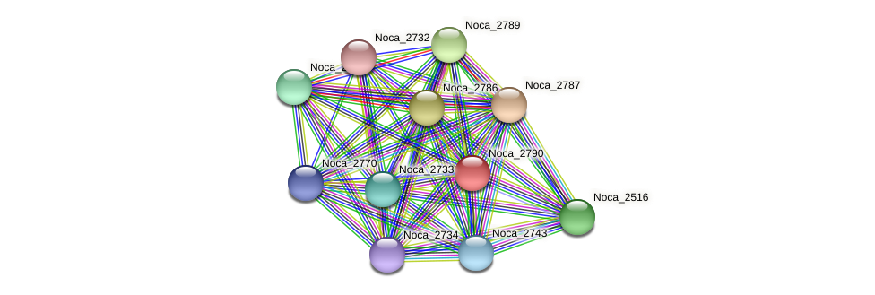 Noca_2790 protein (Nocardioides sp. JS614) - STRING interaction network
