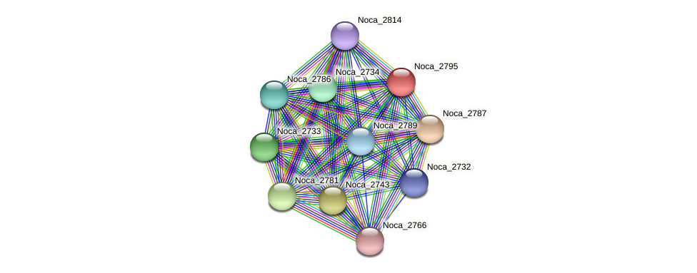 Noca_2795 protein (Nocardioides sp. JS614) - STRING interaction network