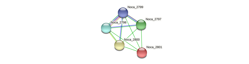 Noca_2801 protein (Nocardioides sp. JS614) - STRING interaction network