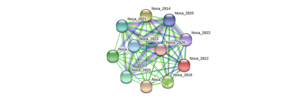 Noca_2812 protein (Nocardioides sp. JS614) - STRING interaction network