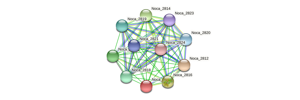 Noca_2815 protein (Nocardioides sp. JS614) - STRING interaction network