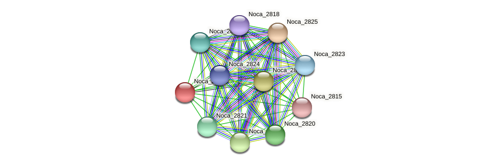 Noca_2817 protein (Nocardioides sp. JS614) - STRING interaction network