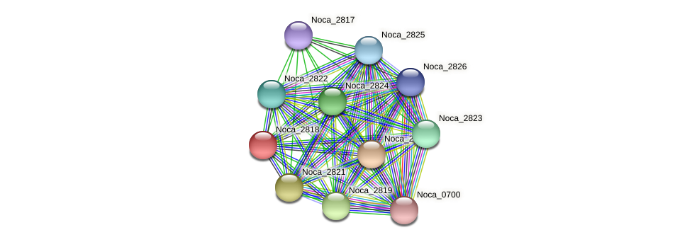 Noca_2818 protein (Nocardioides sp. JS614) - STRING interaction network