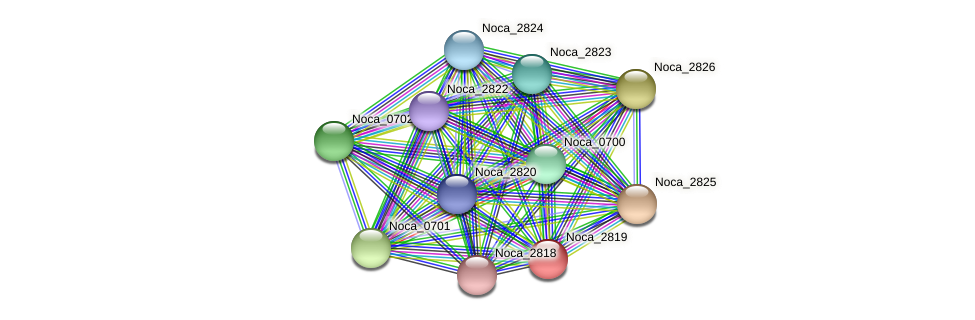 Noca_2819 protein (Nocardioides sp. JS614) - STRING interaction network