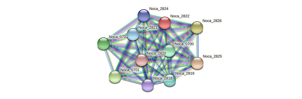 Noca_2822 protein (Nocardioides sp. JS614) - STRING interaction network