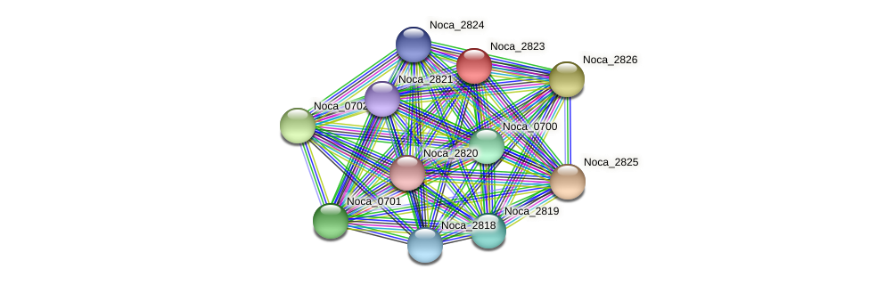 Noca_2823 protein (Nocardioides sp. JS614) - STRING interaction network