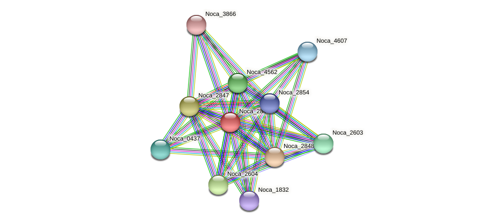 Noca_2849 protein (Nocardioides sp. JS614) - STRING interaction network