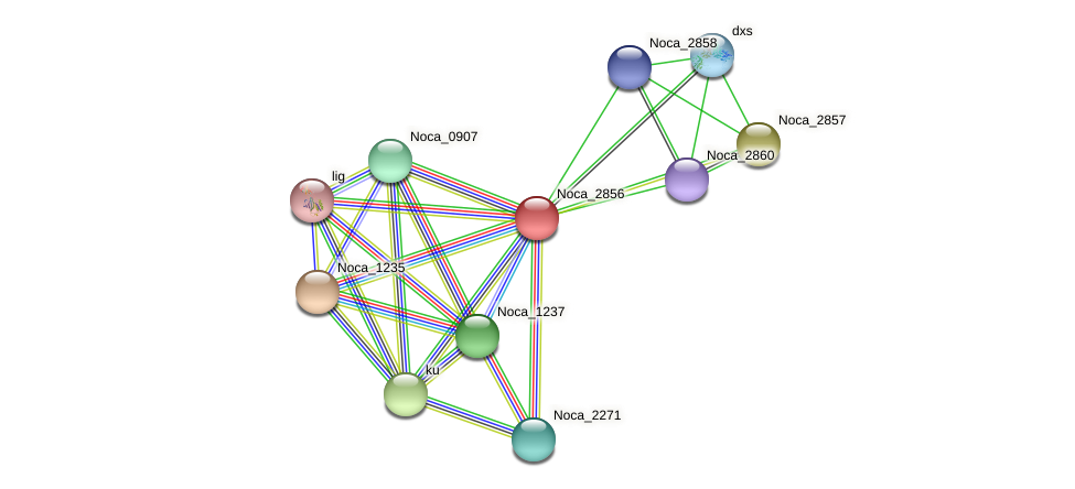 Noca_2856 protein (Nocardioides sp. JS614) - STRING interaction network