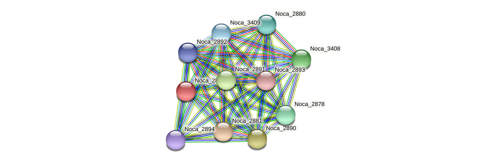 Noca_2879 protein (Nocardioides sp. JS614) - STRING interaction network