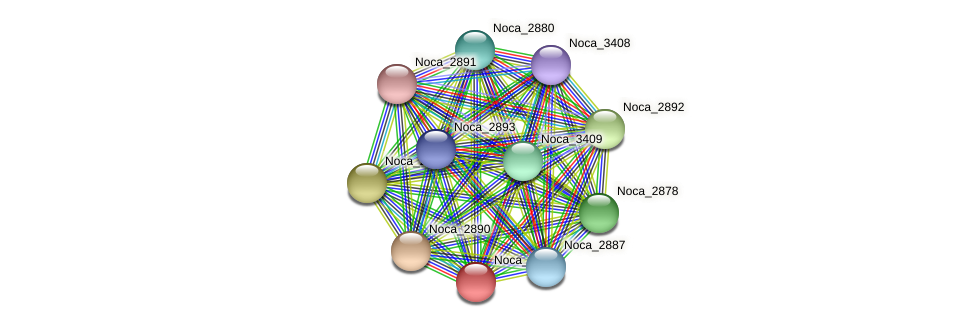Noca_2881 protein (Nocardioides sp. JS614) - STRING interaction network