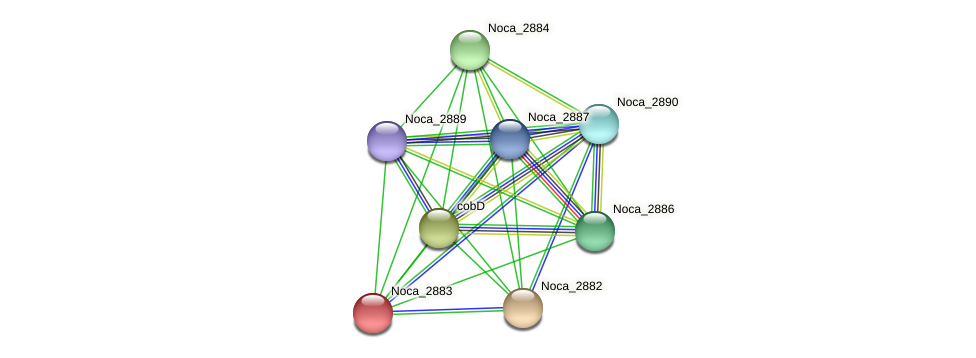 Noca_2883 protein (Nocardioides sp. JS614) - STRING interaction network