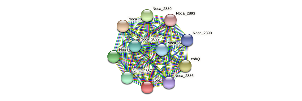 cobD protein (Nocardioides sp. JS614) - STRING interaction network