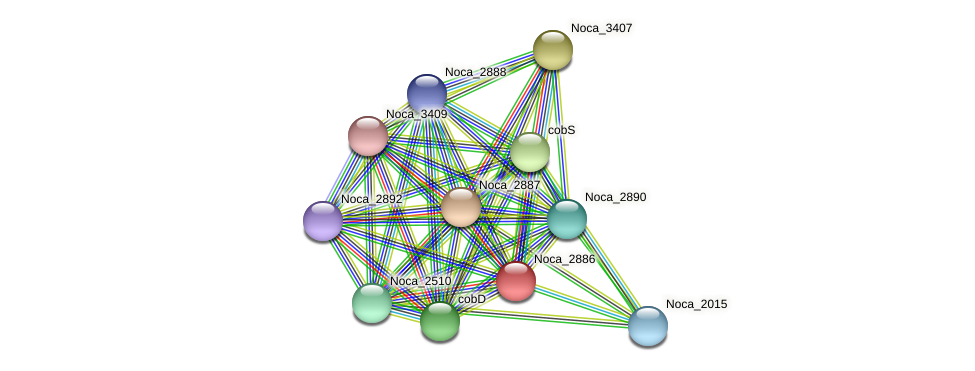 Noca_2886 protein (Nocardioides sp. JS614) - STRING interaction network