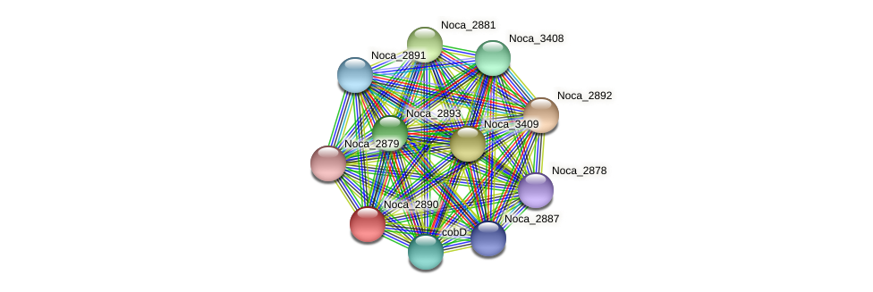 Noca_2890 protein (Nocardioides sp. JS614) - STRING interaction network