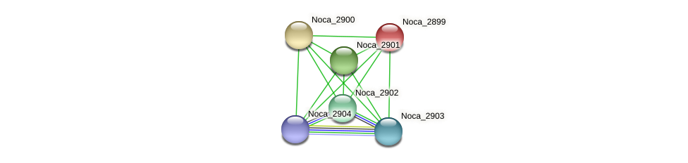 Noca_2899 protein (Nocardioides sp. JS614) - STRING interaction network