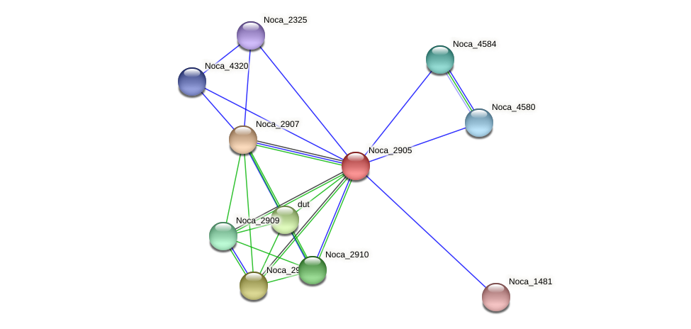 Noca_2905 protein (Nocardioides sp. JS614) - STRING interaction network