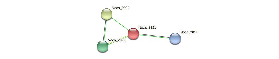 Noca_2921 protein (Nocardioides sp. JS614) - STRING interaction network