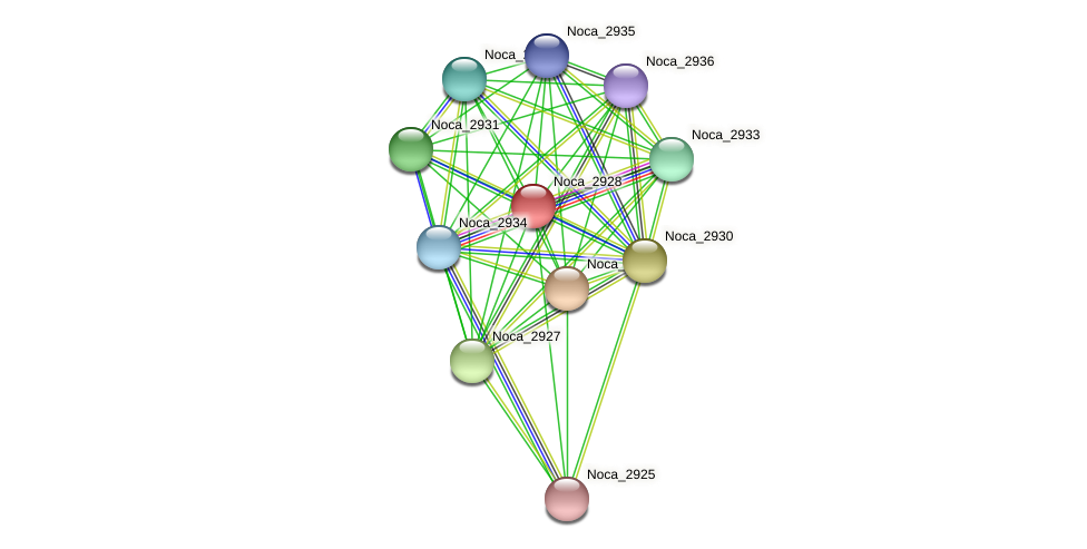 Noca_2928 protein (Nocardioides sp. JS614) - STRING interaction network