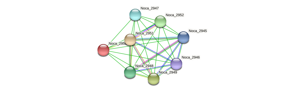 Noca_2950 protein (Nocardioides sp. JS614) - STRING interaction network