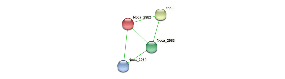Noca_2982 protein (Nocardioides sp. JS614) - STRING interaction network