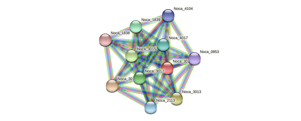 Noca_3016 protein (Nocardioides sp. JS614) - STRING interaction network