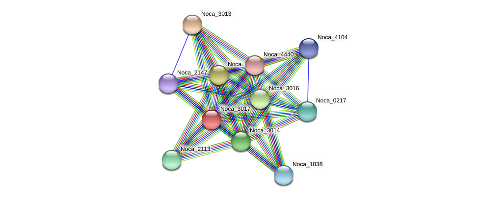 Noca_3017 protein (Nocardioides sp. JS614) - STRING interaction network