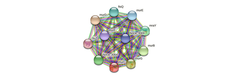 murC protein (Nocardioides sp. JS614) - STRING interaction network