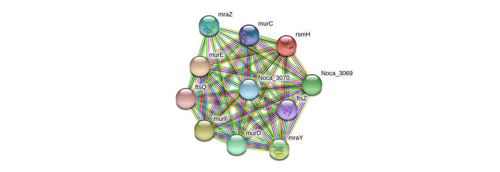rsmH protein (Nocardioides sp. JS614) - STRING interaction network