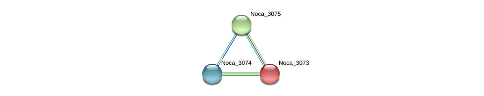 Noca_3073 protein (Nocardioides sp. JS614) - STRING interaction network