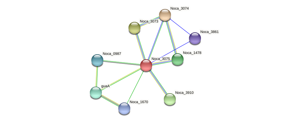 Noca_3075 protein (Nocardioides sp. JS614) - STRING interaction network