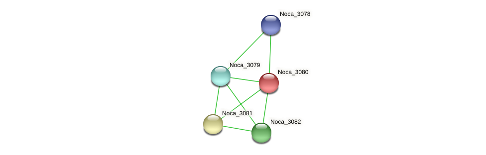 Noca_3080 protein (Nocardioides sp. JS614) - STRING interaction network
