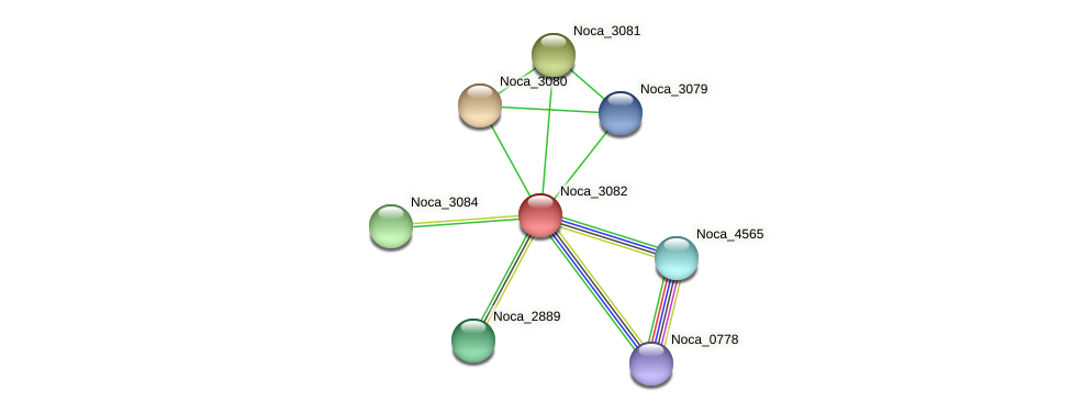 Noca_3082 protein (Nocardioides sp. JS614) - STRING interaction network